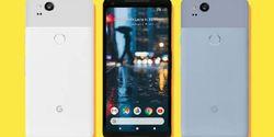 Google Pixel 3 Versi Murah Bakal Usung Nama Spesies Ikan, Apa Nih?