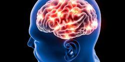 Penelitian Terbaru Buktikan Orang Tua Masih Mampu Produksi Sel Otak