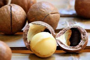 Tak Disangka, Rutin Makan Kacang Macadamia Bisa Turunkan Risiko Serangan Jantung dan Stroke