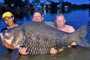 80 Menit! Orang ini Sukses Pancing Ikan Mas Raksasa di Sebuah Danau