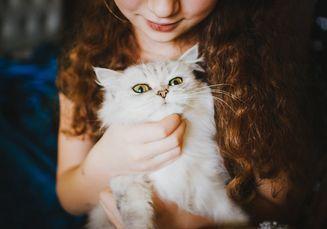 Ingin Mengelus Kucing? Ini Bagian Tubuh yang Disukai dan Tidak Disukai