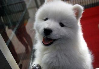 Unik! Ternyata Anjing Sadar Jika Pemiliknya Sedih, Lalu Berusaha Menghibur