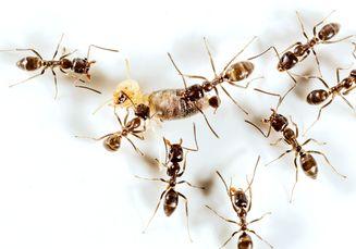 Dari Pankreas Rusak hingga Insulin Seumur Hidup, Inilah Hal yang Wajib Diwaspadai jika Air Kencing Anak Dikerubuti Semut