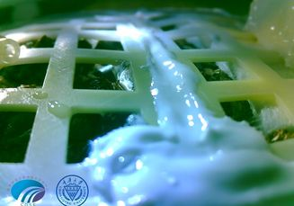 Bibit Tanaman yang Dibawa Rover Tiongkok Berhasil Tumbuh di Bulan