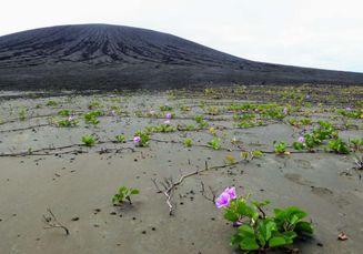 Baru Muncul 4 Tahun Lalu, Ekosistem Pulau Ini Kejutkan Para Ilmuwan