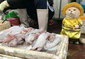 Imut Banget! Begini Aksi Kucing Penjaga Lapak Ikan di Pasar Vietnam, Gemes!