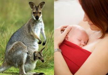 Wow! Begini Manfaat Perawatan Metode Kanguru untuk Bayi Baru Lahir