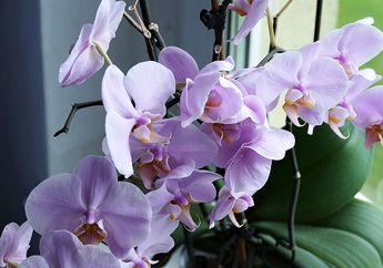 5 Tanaman Indoor Cantik ini Paling Mudah Dirawat dan Tak Gampang Mati!