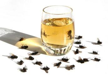 Banyak Lalat Berkeliaran di Dalam Rumah? Usir dengan Ramuan Ini Yuk!