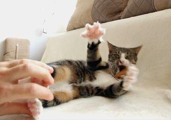 Mengamuk Jika Dibelai Ekornya, Ternyata Ada Bagian-bagian Khusus untuk Menyenangkan Kucing