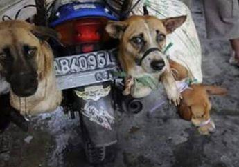 Sebelum Dikonsumsi, Anjing-Anjing di Yogyakarta Dieksekusi Melaui Cara yang 'Halus' hingga yang Paling Sadis