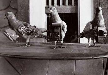 Foto-foto Aerial dari Tahun 1907 Ini Dipotret oleh Burung Merpati