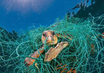 Bagi Hewan, Plastik Mengubah Lautan Menjadi Kawasan Penuh Ranjau