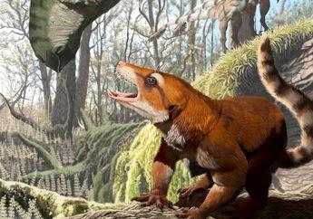 Fosil Ini Ungkap Kelompok Mamalia Purba dan Terbelahnya Benua Pangaea