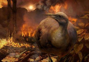 Burung Harus Belajar Terbang Lagi Setelah Meteor Menghantam Bumi