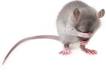 15.000 Tahun Lalu, Manusia dan Tikus Hidup Berdampingan, lo!