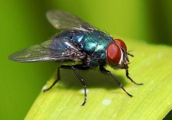 Termasuk Lalat, Jangan Usir 3 Jenis Serangga Ini karena Mereka Sangat Berharga Bagi Rumah Anda