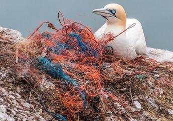 Banyak Hewan Laut Mati Karena Makan Sampah Plastik, Kenapa, ya?