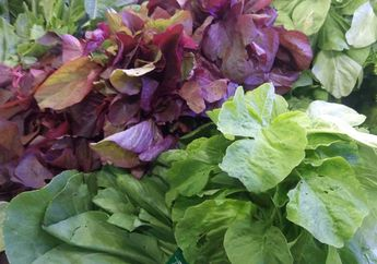 Hati-Hati, Makanan Ini Bisa Mengganggu Penyerapan Kalsium di Tubuh