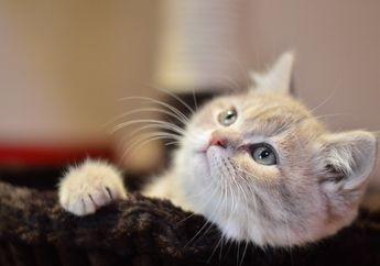 Kenapa Kucing dan Anjing Wajib Divaksin? Yuk, Cari Tahu Alasannya!