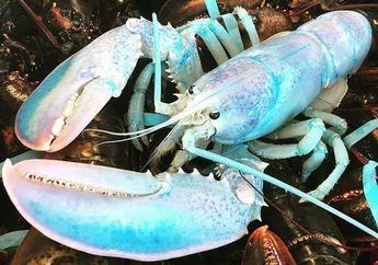 Lobster Langka Berwarna Pastel Ditemukan di Kanada
