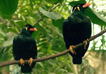 Selain Cerdas dan Fasih Berbicara, Burung Beo Memiliki Umur Panjang