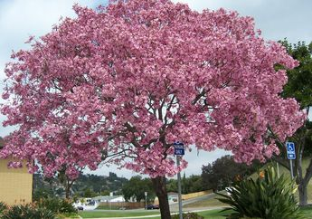 5 Pohon Berdaun Semarak yang Akan Mempercantik Halaman Rumah