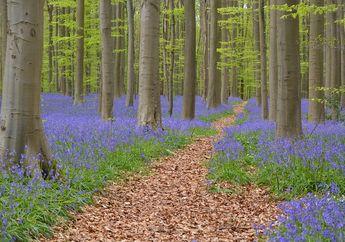 Hutan Biru Ini Seperti di Negeri Dongeng, Di Mana Letaknya?