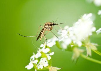 Musim Hujan dan Banyak Nyamuk di Rumah? Usir dengan 5 Bahan Alami Ini!