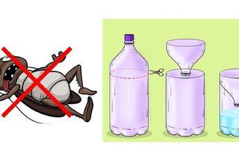 Pakai Cara Ampuh ini Untuk Usir Lalat, Kecoa Hingga Nyamuk di Rumah