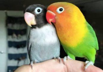 Kisah Burung Kesepian yang Berakhir Bahagia Setelah Menemukan Jodohnya