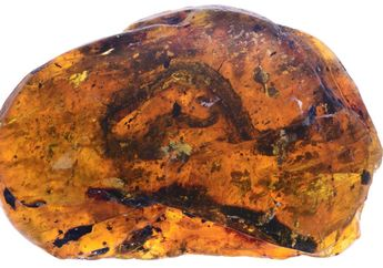 Bayi Ular Tertua dari Era Dinosaurus Ditemukan dalam Sebuah Ambar