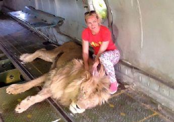 Berniat Foto dengan Singa di Kebun Binatang, Perempuan Ini Justru Bernasib Malang