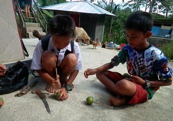 Gasing dari Jambu Biji Kreasi Anak Toraja, Mau Coba?
