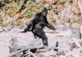 Kisah Manusia Mencari Jejak Bigfoot Selama 60 Tahun, Ini Awal Mulanya