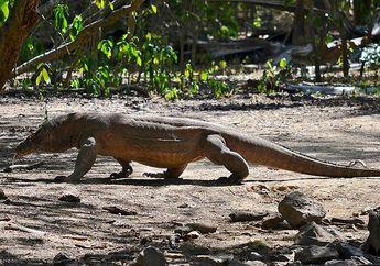 Ingin Berkunjung ke Taman Nasional Komodo? Jangan Abaikan 5 Hal Ini