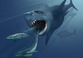 Wah, Peneliti Akhirnya Mengetahui Penyebab Punahnya Hiu Megalodon!