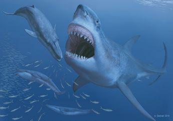 5 Fakta Menarik Mengenai Hiu Purba Raksasa Megalodon yang Ada di Film The Meg
