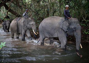 Ini Dia Sekolah Gajah! Apa, ya, yang Dipelajari Para Gajah di Sini?