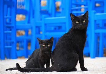 Kucing Hitam Jadi Simbol Halloween, Cari Tahu Asal-usulnya, yuk!
