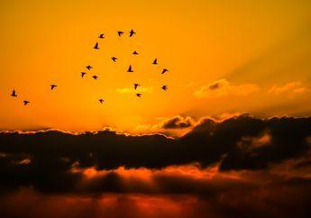 Meski Ukurannya Kecil, Gerombolan Burung Berbahaya bagi Pesawat, Kenapa?