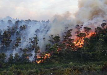 Kembali Terjadi,  Lahan Hutan di Lereng Gunung Merbabu Terbakar