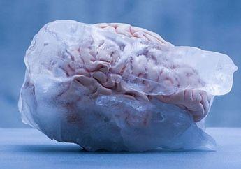 Demi Bisa Dihidupkan Kembali di Masa Depan, Beberapa Orang Autralia Membekukan Otaknya