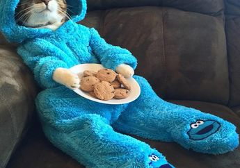Niat Kasih Undangan Rapat, Kedutaan AS Malah Kirim Foto Kucing Lucu Berkostum Cookie Monster