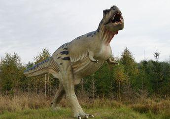 Tyrannosaurus rex Punya Tangan yang Kecil, Apa Kegunaannya, Ya?