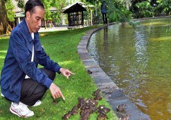 4 Tahun Kepemimpinan Presiden Jokowi, Tengok Hunian Sederhananya di Solo