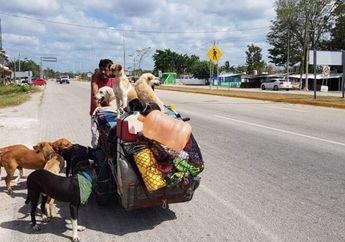 Edgargo si 'Manusia Anjing' yang Keliling Negaranya dengan Becak untuk Selamatkan Anjing Jalanan