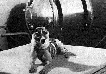 Laika, Anjing Pertama yang Dikirim ke Luar Angkasa dan Mengorbit Bumi