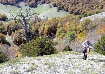 Pohon Tertua di Eropa Ternyata Ada di Italia, Berapakah Usianya?