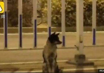 Sangat Menyentuh, Seekor Anjing Setia Menunggu Pemiliknya yang Telah Meninggal di Pinggir Jalan Lebih dari 80 Hari